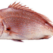 seabream-red